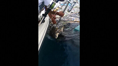Turtles freed from floating garbage off Thai coast