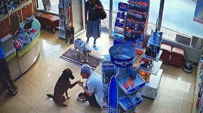 Injured street dog goes to pharmacy to seek help