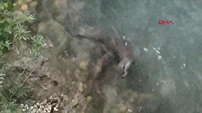 شاهد.. القضاعة أو حيوان الماء الأوراسي وهو يقتنص السمك