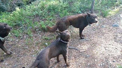 مشهد غريب لكلاب تقف كالتماثيل