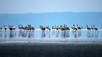 Turkey's central Lake Salt hosts flamingos