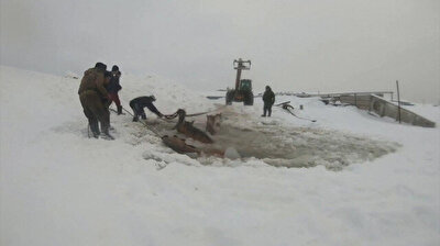 Russian farmers rush to rescue horses trapped in ice