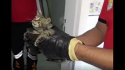 Turkish firefighters rescue kitten stuck in ventilation for three days