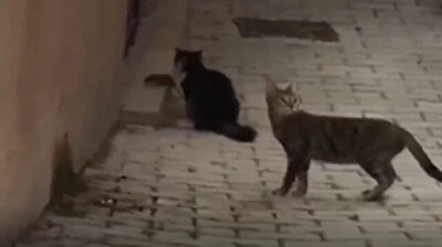 Turkish version of Tom & Jerry: Brave rat scares off four cats