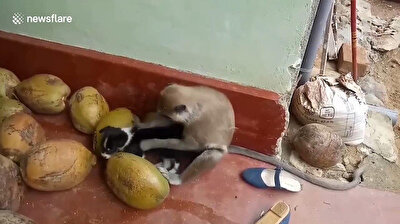 Monkey picks fleas off adorable puppy as the two become best buddies
