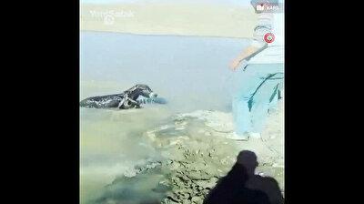 Cruel men almost drown poor baby donkey in Turkey