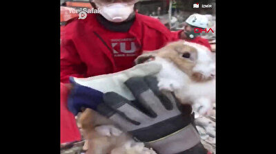 Ponpon the rabbit rescued from rubble in Turkey after deadly quake
