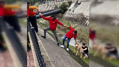 صنعوا من أنفسهم حبلًا لإنقاذ كلب علق داخل قناة مياه منحدرة!