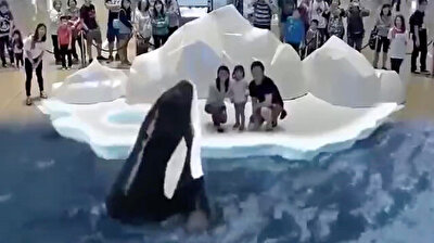 Fearless family brushes shoulders with killer Orca whales in 5D animation