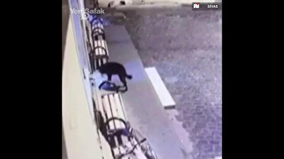 Paws up! Adorable thief caught stealing shoes outside mosque in Turkey