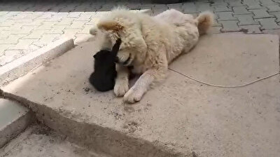 صداقة فريدة من نوعها بين كلب وقطة