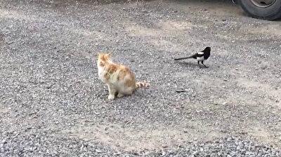 لحظات طريفة بين غراب مشاغب وقط سيء المزاج غير مكترث!