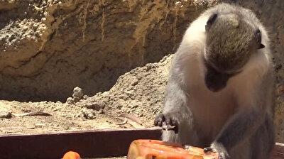 فواكه مثلجة تنعش حيوانات داخل حديقة في مرسين التركية
