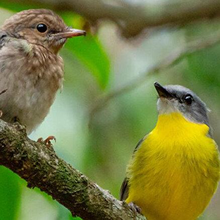 Milyarlarca kuş ölebilir