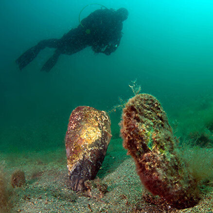 Bu da denizdekikoronavirüs!