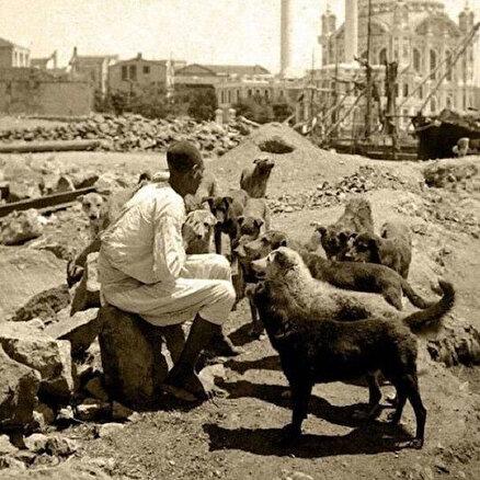 Kediler ve köpekler şehri İstanbul