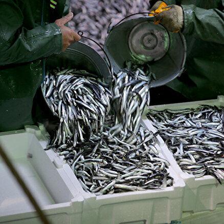 Balıkçılar hücum etti