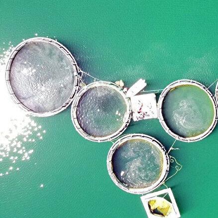 Denizi olmayanBozkırda 60 ton balık üretti