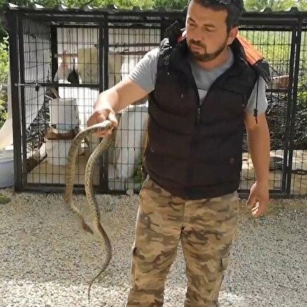 Yılanı böyle yakaladı