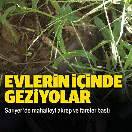 İstanbul Sarıyerde mahalleyi akrepler ve fareler bastı