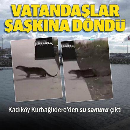 Kurbağalıdere'de su samuru çıktı, vatandaş şaşkına döndü