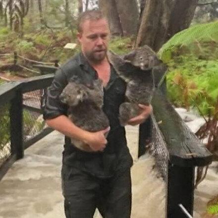 Avustralyada felaketler bitmiyor: Sellerle boğuşuyor