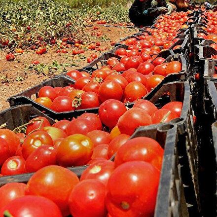 Rusya Türkiyeden domates ithalat kotasını artırdı