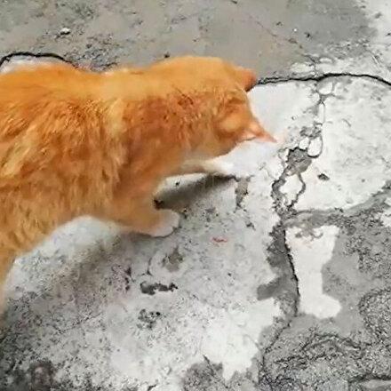 Kedinin kertenkeleyle oyunu