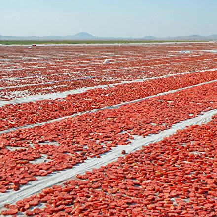 Türkiyenin yaş meyve ve sebze ihracatında ilk sıralar belli oldu