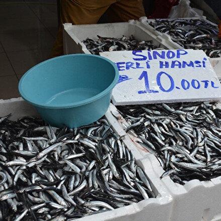 Sinopta hamsinin fiyatı düştü: Dün 30 liraydı bugün 10 lira