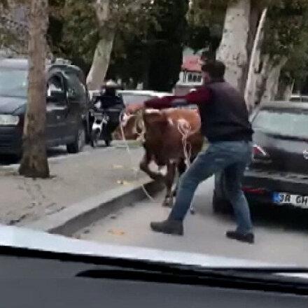 Amasyada sahibinin elinden kaçan boğa trafiği birbirine kattı