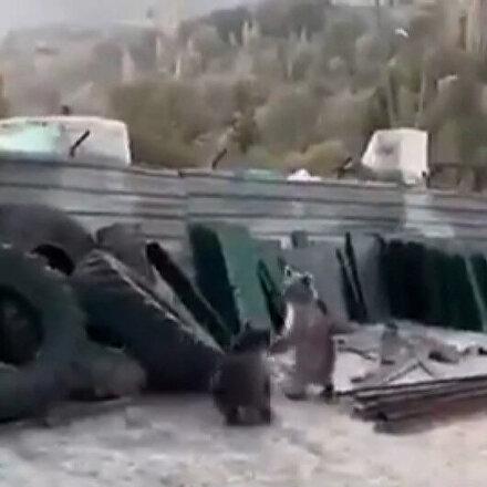 Kendilerini sanayi sitesinde bulan yavru ayılar esnafı kahkahaya boğdu