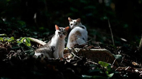 Brazilian island inhabited by wild cats, abandoned felines