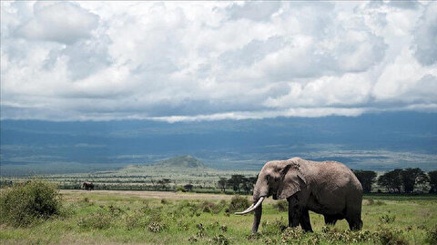 Elephant poaching reduces by 50 pct in Kenya