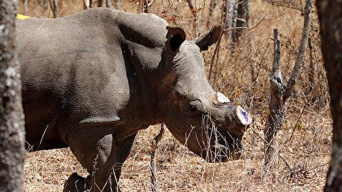 Wild animals kill more people than COVID-19 in Zimbabwe