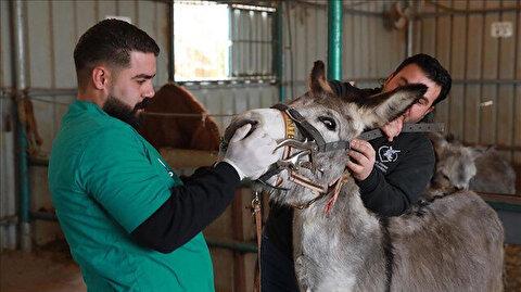 """""""مستشفى الحمير"""".. ملجأ آمن للحيوانات العاملة في فلسطين"""