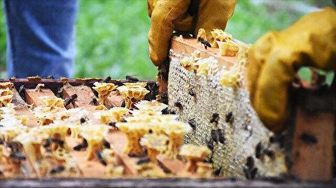 بينها بلدان عربية.. العسل التركي يزين موائد 52 دولة