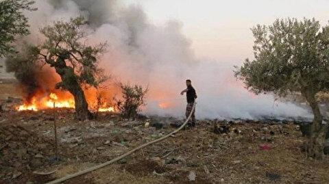 مستوطنون يحرقون عشرات أشجار الزيتون جنوبي الضفة
