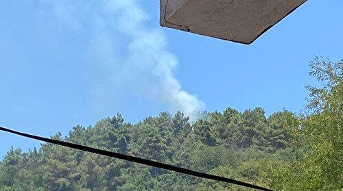 Beykoz'da ormanlık alanda yangın: Kısa sürede kontrol altına alındı