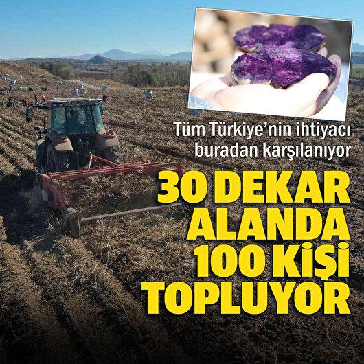 30 dekar alanda 100 kişi topluyor: Tüm Türkiye'nin ihtiyacı buradan karşılanıyor