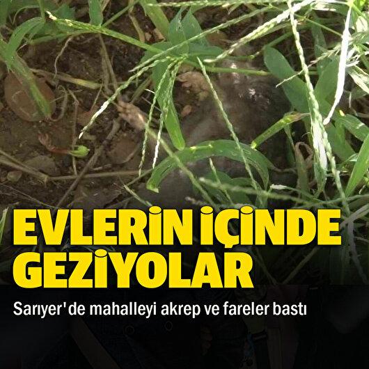 İstanbul Sarıyer'de mahalleyi akrepler ve fareler bastı