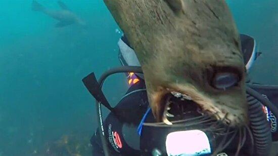 Tehlikeli su hayvanları tarafından tüyler ürperten saldırı anları!