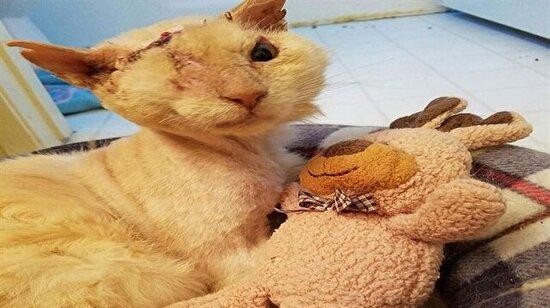 O sadece sevgi isteyen bir kediydi, yüzüne asit atıldı