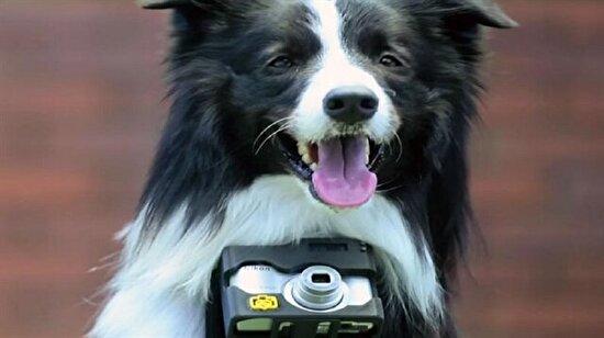 Adı: Grizzler, özelliği: Dünyanın ilk fotoğrafçı köpeği