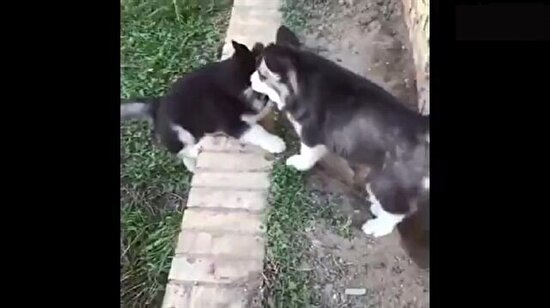 En sevimli yardımlaşma