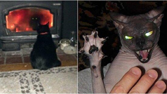 Şeytaaaan: Kedilerin karanlık yüzünü gösteren 24 ürkütücü fotoğraf