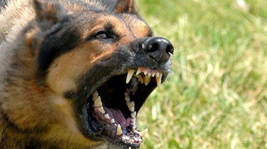 """15 köpek 80 yerinden ısırdı:  """"Allah'a dua edip 'Kurtar beni' dedim. Hala şoktayım"""""""