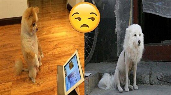 Üstlerden biraz alalım yanlar kalsın: Tıraş edilen köpekler