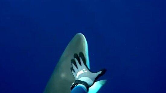 Kendisine saldıran köpek balığını komalık eden adam