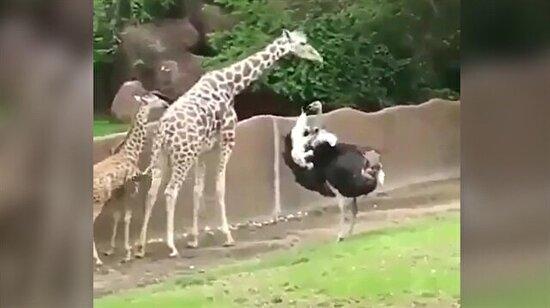 Her canlı başı sıkıştığında annesine koşar!